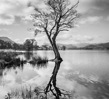 Tree Reflection at Ullswater, Lake District by Heidi Stewart