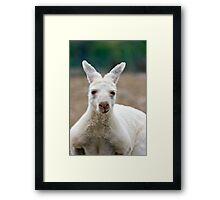 What do you mean I'm white! Aren't all Kangaroos white? Framed Print