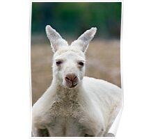 What do you mean I'm white! Aren't all Kangaroos white? Poster