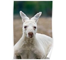 What do you mean I'm white! Aren't all Kangaroos white? Poster