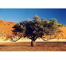 Desert Tree Photographic Print