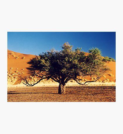 Desert Tree Photographic Print