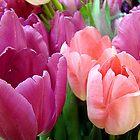 Tulip Time by Susan Bergstrom