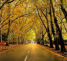 autumn avenue by fuxart