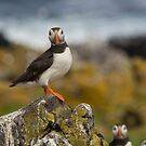 Puffins by M.S. Photography/Art