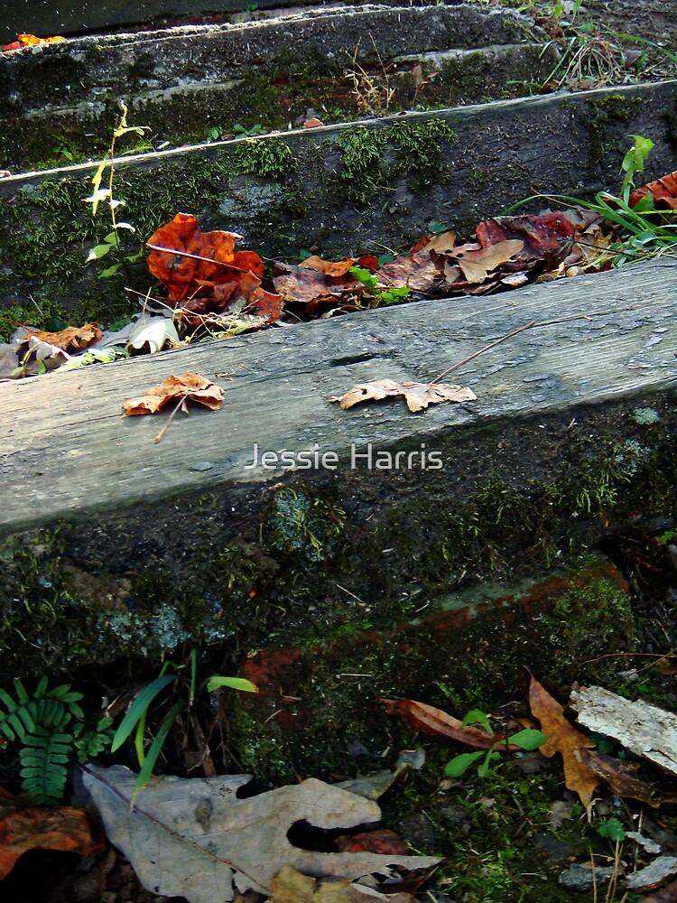 Pathway by Jessie Harris
