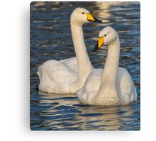 Whooper Swans Canvas Print