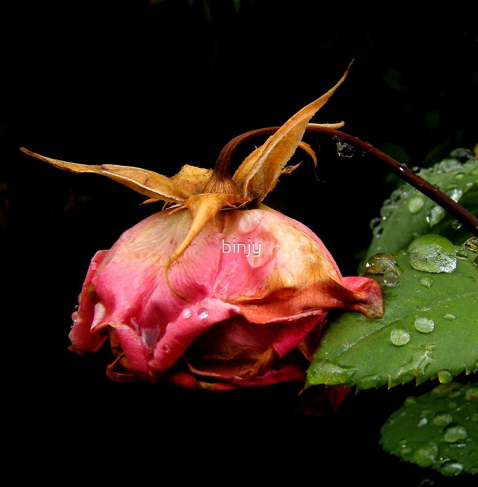 The Gentle Rain by binjy