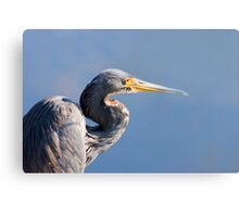 Blue Heron Blues Canvas Print