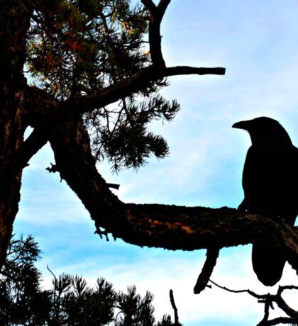 Birds On Grand Canyon's South Rim Sticker