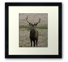 king of the forest Framed Print
