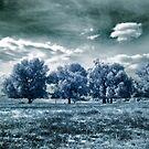 Tree Zone by Naomi Frost