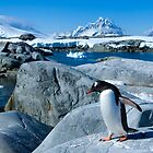 Penguin on a Mission by Interstellar Images