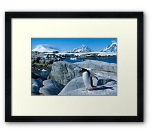 Penguin on a Mission Framed Print