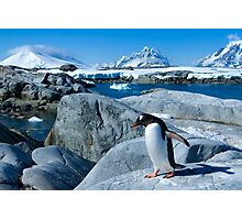 Penguin on a Mission Photographic Print