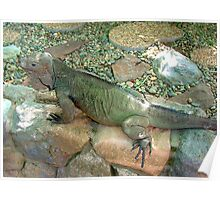 "THINK LIZARDS: ""Camouflaged"" Poster"