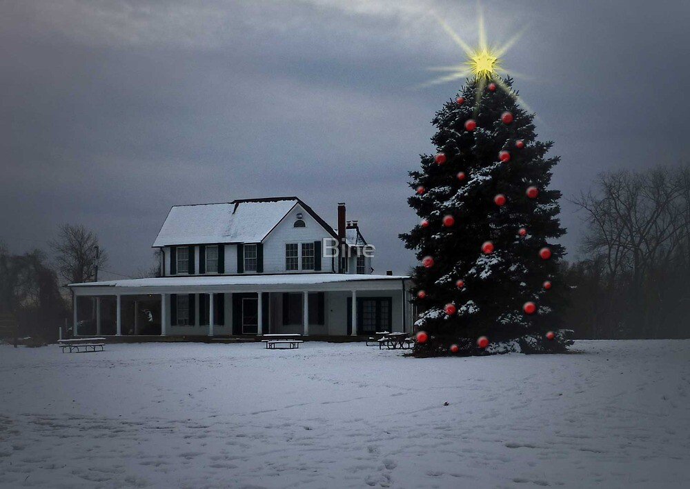 Holiday Solitude at Lewinsville Farm, Virginia by Bine