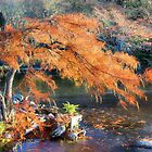 Bald Cypress by SuddenJim
