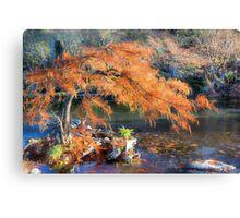 Bald Cypress Canvas Print