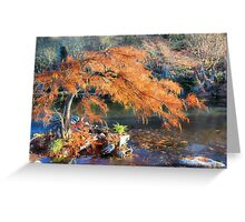 Bald Cypress Greeting Card