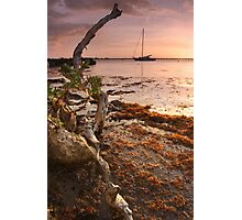 Sargasso Weed and Buttonwood at Sunrise with Sailboat behind Photographic Print