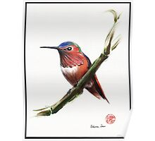 Little Hummer - Prisma pencil & acrylic painting Poster