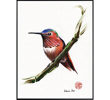 Little Hummer - Prisma pencil & acrylic painting Photographic Print