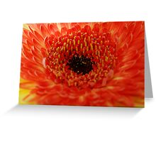 Orange... Greeting Card