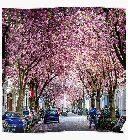 Cherry Blossom Street #1- Bonn, Germany Poster