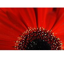 Red... Photographic Print