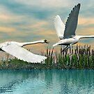 Swans in Flight by Walter Colvin