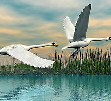 Swans in Flight by Walter Colvin