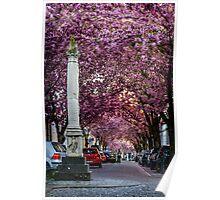 Cherry Blossom Street #2- Bonn, Germany Poster
