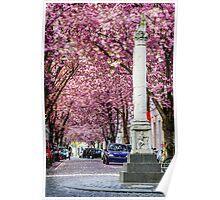 Cherry Blossom Street #3- Bonn, Germany Poster