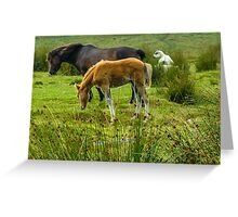 Dartmoor Ponies Greeting Card