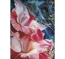 Gladiola Photographic Print