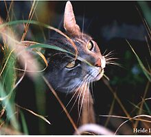 Stalking Cat by Heide  Lorek