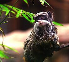 Beard monkey by Hanae