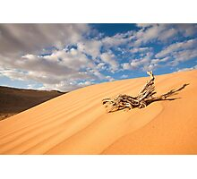 Desert sand dune with blue sky Photographic Print