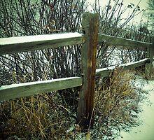Split Rail Fence by LINDA DEVLIN
