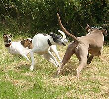 Doggy Madness by Viviane Cathmoir