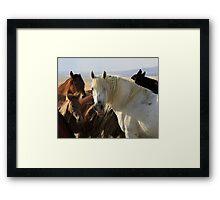 The White Stallion Framed Print
