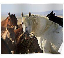 The White Stallion Poster