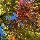 Autumn (2014) by Joseph Rotindo