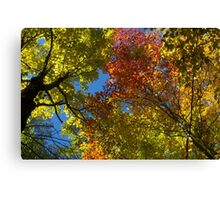 Autumn (2014) Canvas Print