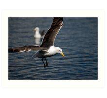 Lesser Black-backed Gull Art Print