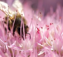 Pollenate no. 1 (2013) by Joseph Rotindo