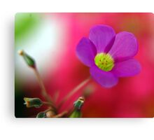 Purple... Canvas Print