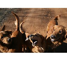 Rock Talking Dog Days Photographic Print