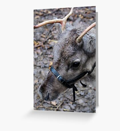 Wot! No Red Nose! Greeting Card